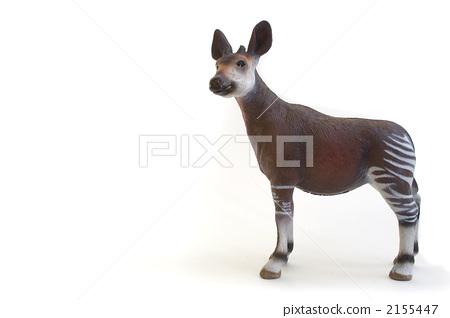 图库照片: 霍加 动物 稀有动物