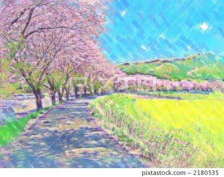 樱桃树 吉野樱花树