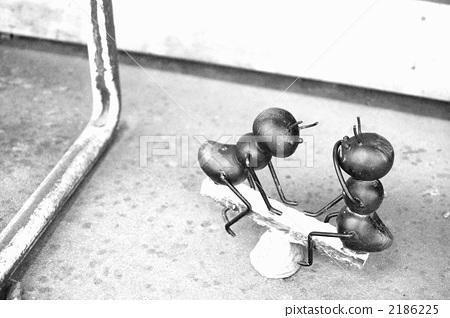 一只蚂蚁 蚂蚁 黑白