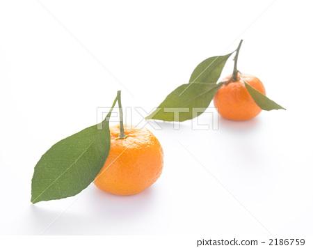 橘子 橘子 桔子 水果  放大 收藏夹 下载水印图