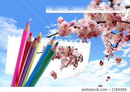 铅笔 樱花 樱桃树