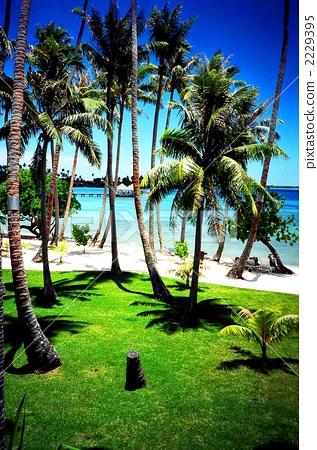 椰子树 博拉博拉岛 场景