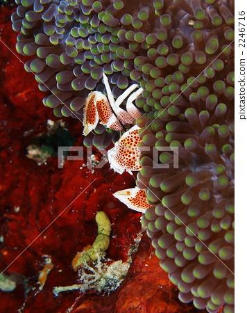 海洋动物 甲壳动物 海葵