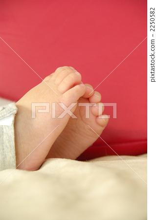 脚背 脚 动物宝宝