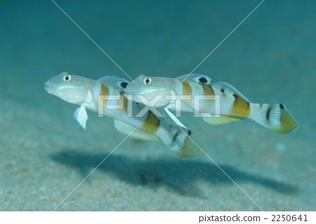 壁纸 动物 昆虫 鱼 鱼类 桌面 450_319