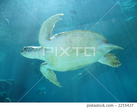图库照片: 海龟 海洋动物 美丽海水族馆