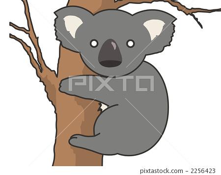 考拉 动物群 动物宝宝