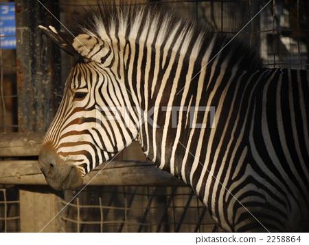动物 陆生动物 黑白