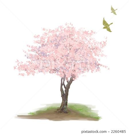 樱花 樱桃树 剪贴画