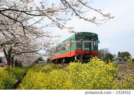 摩卡铁路 钢轨 樱桃树