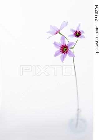 图库照片: 花瓶 可爱 漂亮