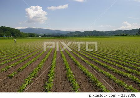照片素材(图片): 田园 田园风景 作物