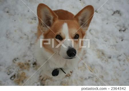 www.dydog.net