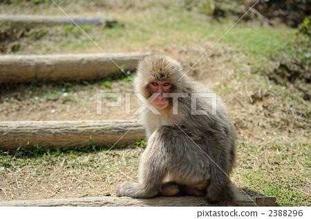 陆生动物 动物宝宝-图库照片