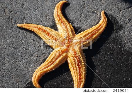 海星 海洋动物 生物
