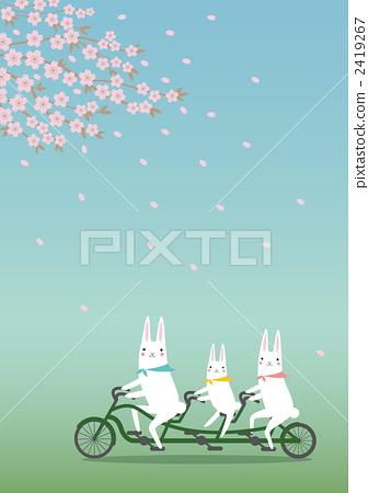 骑自行车 樱花 樱桃树