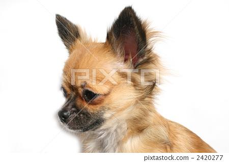 可爱 动物-图库照片