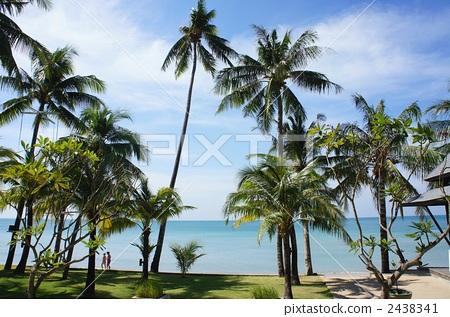 椰子树 海事的 大海