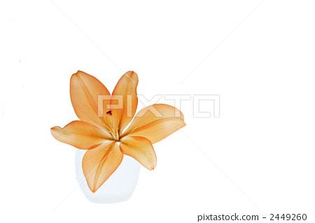 花朵 白色背景 花瓣