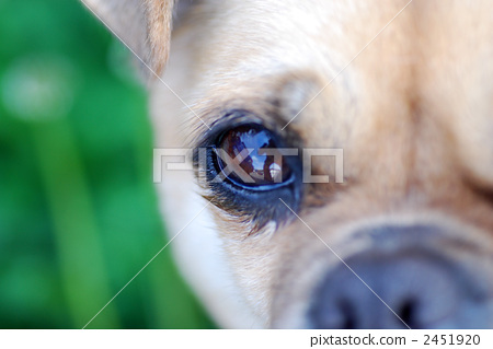 混种狗 眼睛 动物