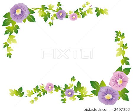 图库插图: 牵牛花 花朵 花卉