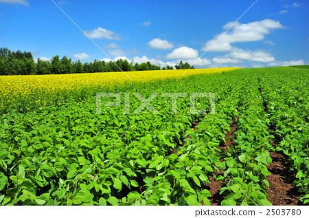 壁纸 成片种植 风景 植物 种植基地 桌面 450_317