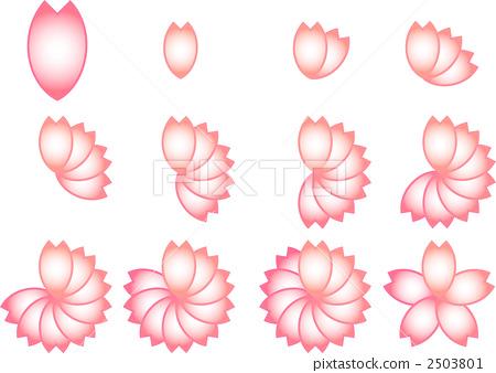 插图: 花瓣 樱花 樱桃树