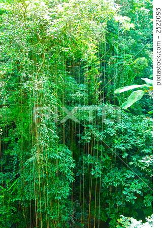 森林 丛林 照片 茂密的森林 丛林 热带雨林 首页 照片 风景/自然 森林