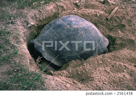 加拉巴哥岛龟类 去有趣的地方 加拉帕戈斯群岛