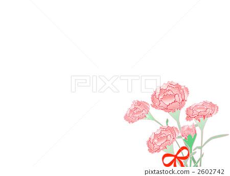 康乃馨 母亲节 花朵