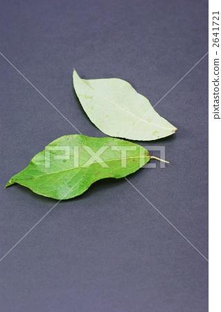 树叶 叶子 银杏叶
