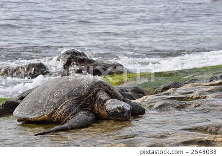 海龟 海洋动物 大海