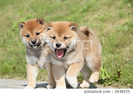 图库照片: 小狗 动物 狗
