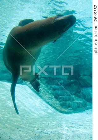 图库照片: 海洋动物 密封 海底的
