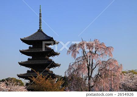 五重塔 树枝低垂的樱花树