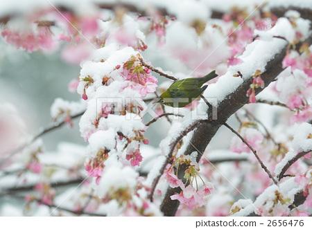 春天 动物 雪花