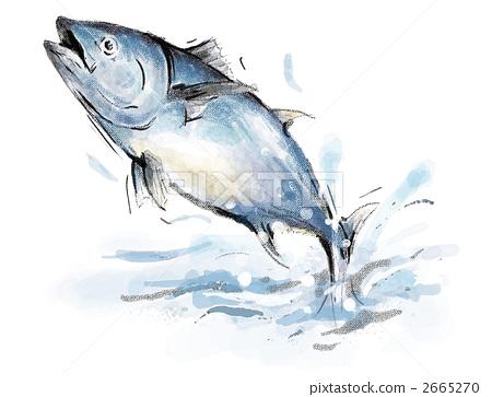 ?n???_插图素材: 鲔鱼 红鲔 金枪鱼