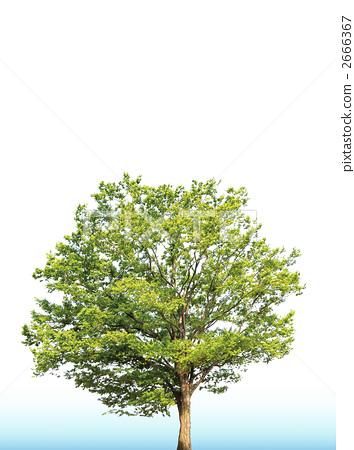 雕刻木材树图片大全
