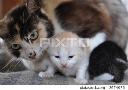 图库照片: 小猫 父母身份 父母和小孩