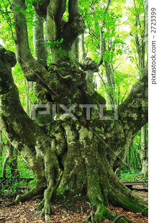 大海山树风景图片