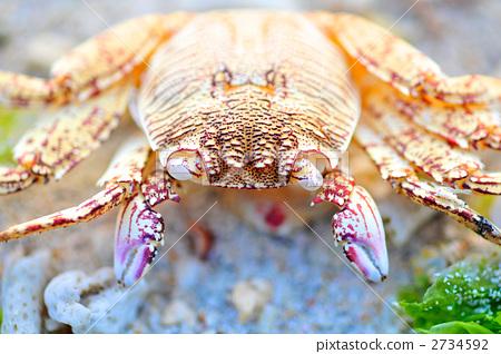 甲壳动物 海洋动物