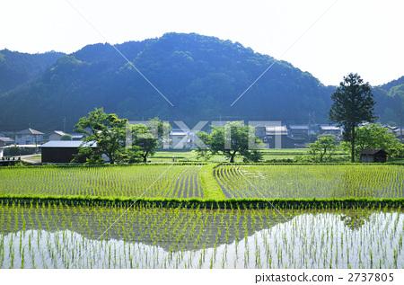 乡村风光 水稻 农村场景