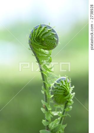 蕨菜绿色背景矢量图