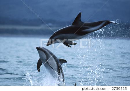 鲸鱼简笔画彩色配图