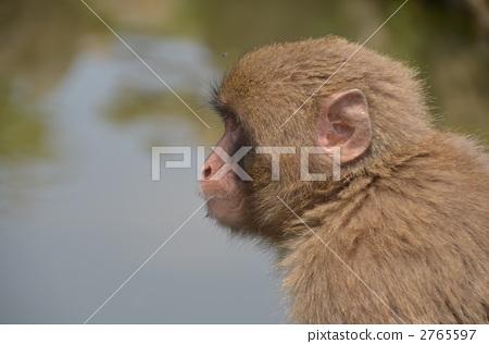 动物群-图片素材