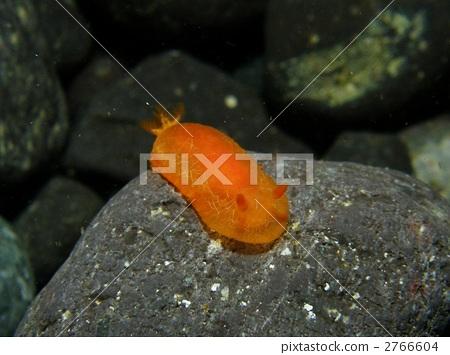 海参 水下照片 外壳