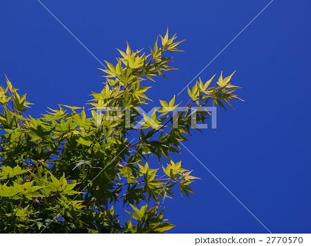 秋天颜色 天蓝色背景 翠绿
