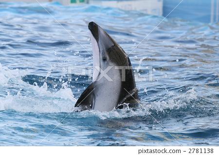 海豚 动物 海洋动物