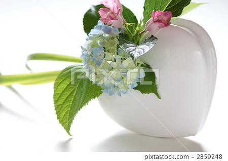 花瓶 溲疏 锦带花