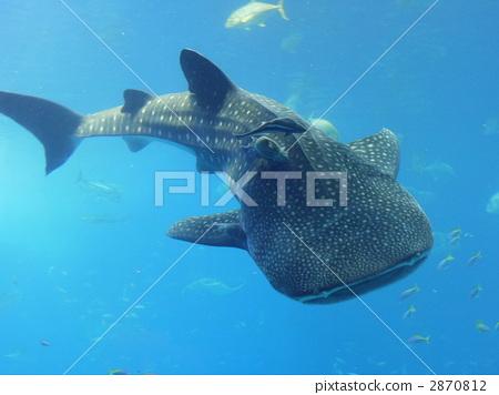 背景边框 大海鱼